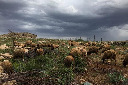 A rural shepherding village in Morocco