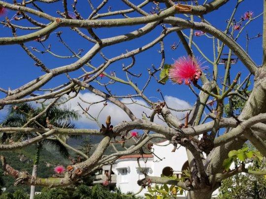 Spring in Haiti