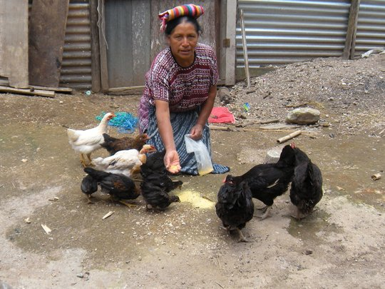 Providing Microloans for 15 Women in Guatemala