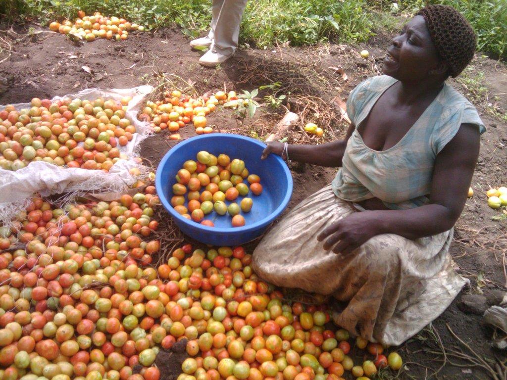 help 250 uganda women farmers attain food security