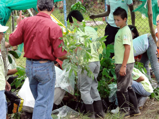 Third step, plant trees in nursery at school