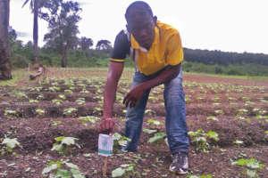 Planting in Liberia