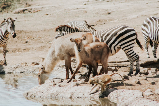Wildlife gathers at a watering hole