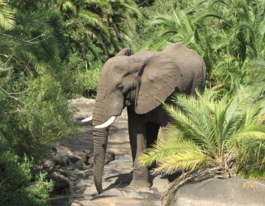 Protecting Elephants and Rhinos in Malawi
