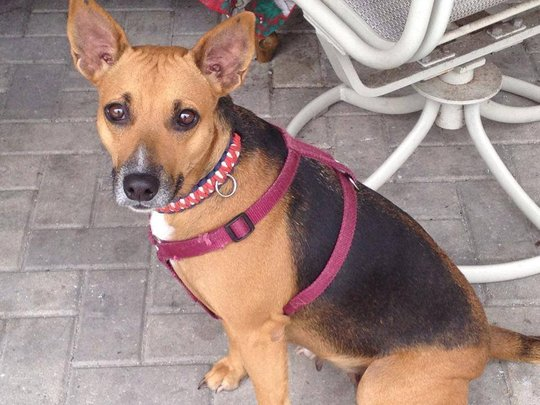 Help! Dog needs spaying & split dewclaw removal - GlobalGiving