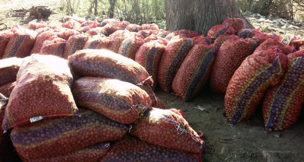 myrobalan (Gooseberry) for Processing