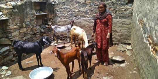 Goat Rearing Activity by SHGs