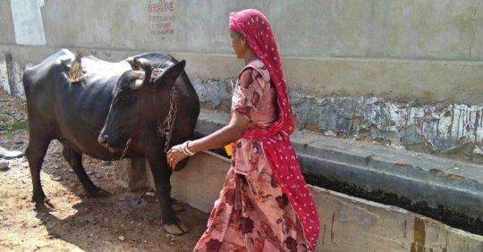 Animal Husbandry Activity by SHGs