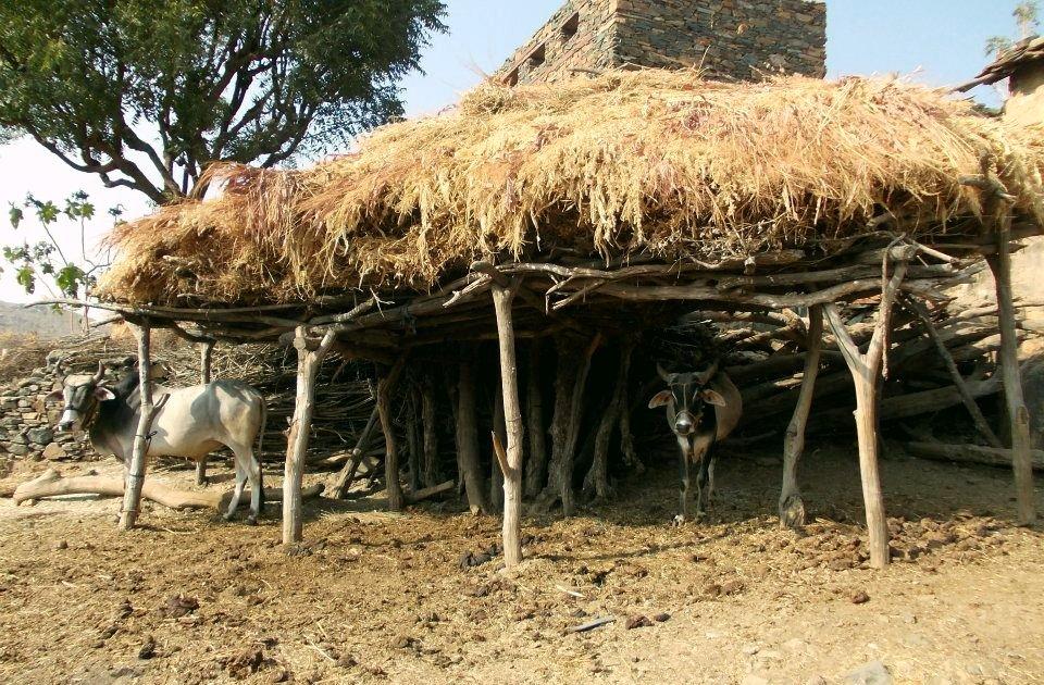 Tribal family
