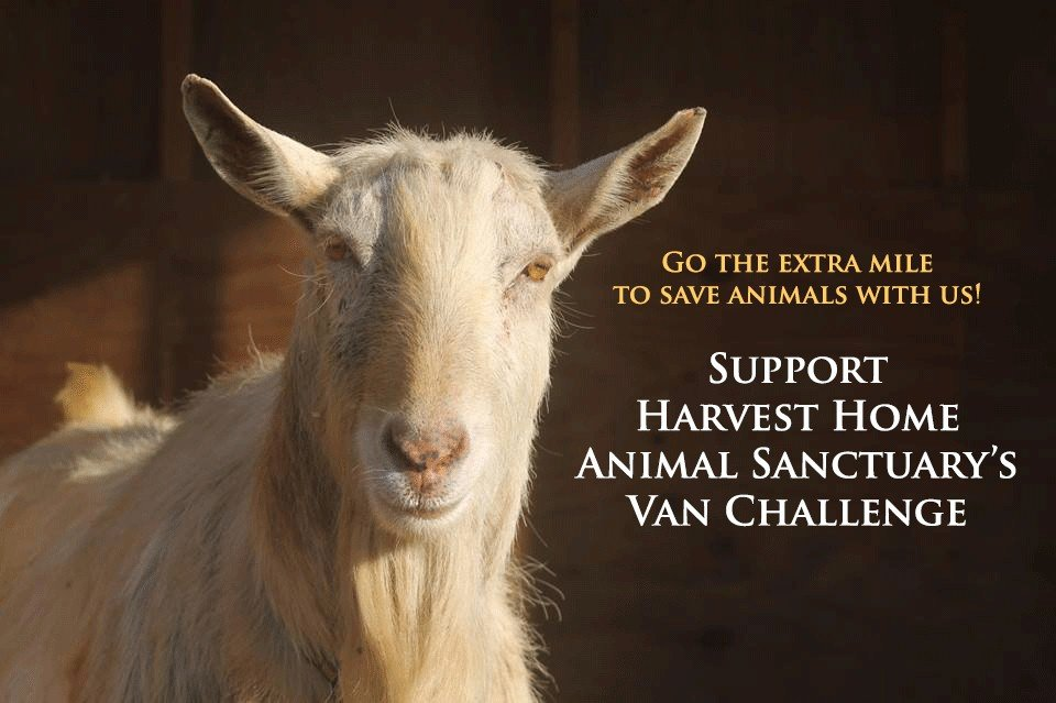 Help Harvest Home purchase our first rescue van!