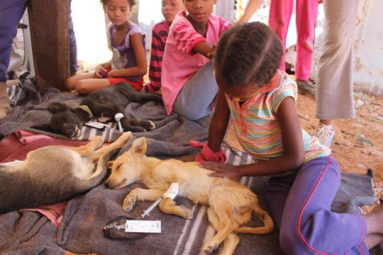 16 Sept in Aus-25 dogs & 4 cats sterilized