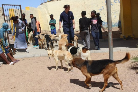 Luderitz, 17 Sept-31 dogs & 5 cats