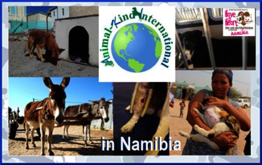 Animal-Kind International in Namibia!