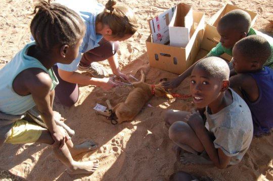 August-148 animals fixed-Otji, Outjo, Kamanjab