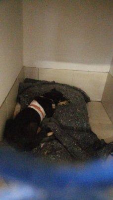 Boe Boe at the vet's office
