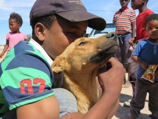 1 of many well cared for dogs at an HAH clinic