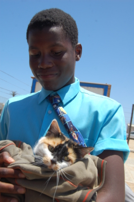 A kitty gets parasite treatment & booster shots