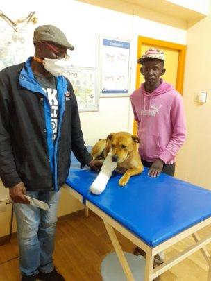 Dog Sure-broken leg treated