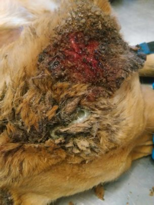 Dave was treated for a horrible wound on his head