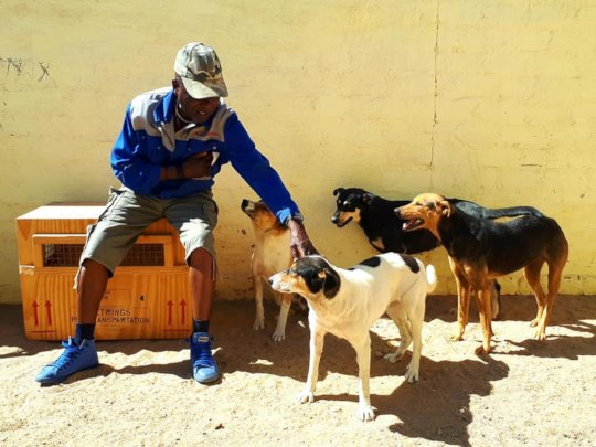 HAH Luderitz doggy clients