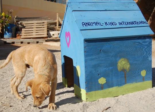AKI doghouse