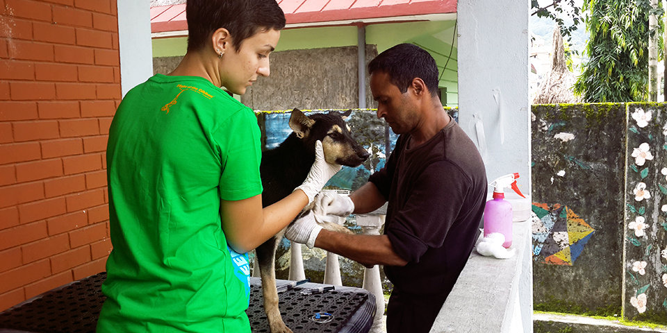 Improve the lives of animals in Nepal