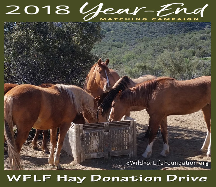 Reports on WFLF Hay Drive to Aid Horses and Burros in Need