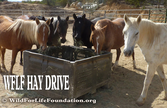 Feeding victimized horses in need