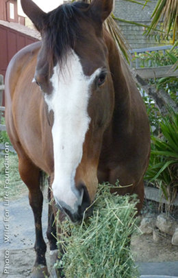 WFLF Hay Drive to Aid Starved & Homeless Horses