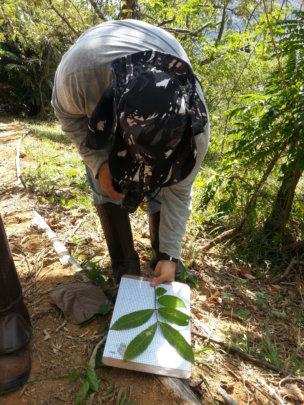 Identifying tree species
