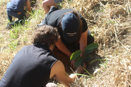 Planting the trees!
