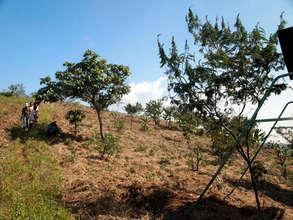 Progress on native species forest restoration
