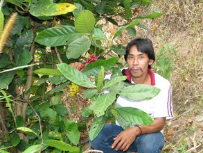 Village member showing existing aribica coffee plants