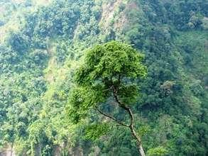 Intact Langur Habitat