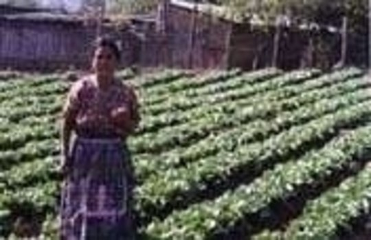 Chichoy Potato-Producing Project in Guatemala
