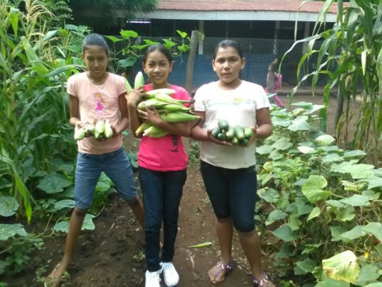 Corn, cucumbers and farmers - the perfect harvest