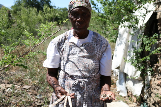 Gogo showing off her moringa seeds and pods
