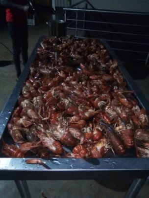 Crawfish cooked and heading for the frezer