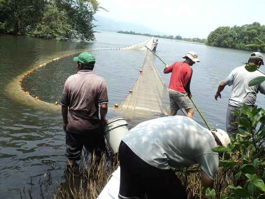 Monitoring of fish in the Chachaguala lagoon