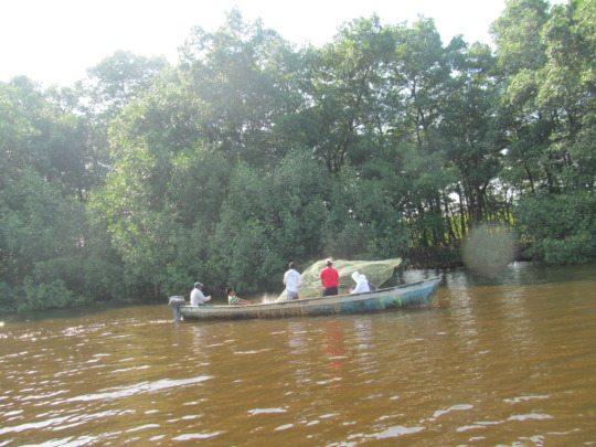Monitoring the Fish Recovery Sites in Guatemala