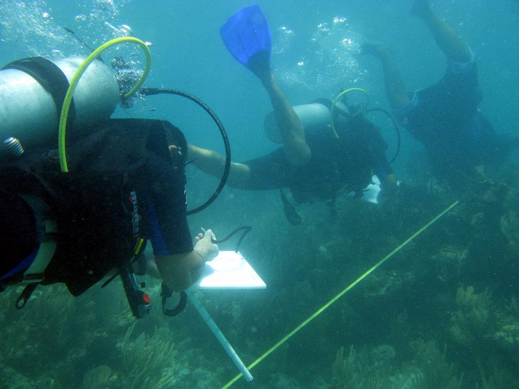 Fishermen in action