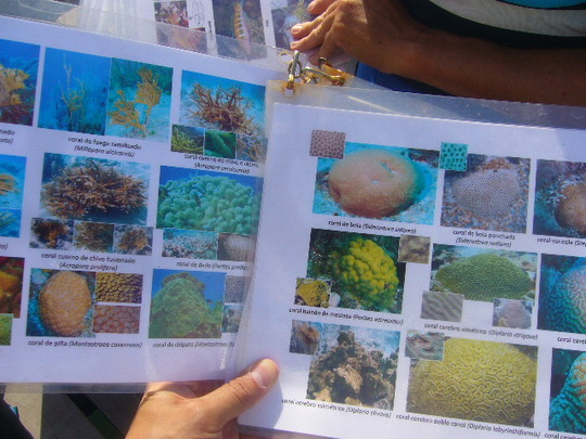 Sub aquatic material used by the monitoring team.