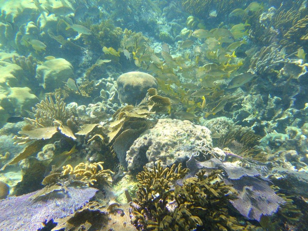 Puerto Morelos has healthy ecosystems again