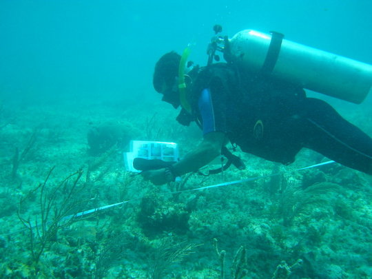 Reef monitoring in Puerto Morelos National Park