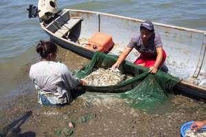 Women sorting anchovies