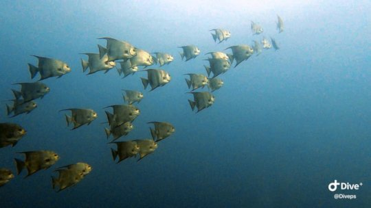 Empowering Fishing Communities in the MAR Reef