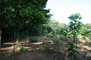 2009 planting