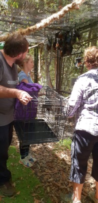 Unloading pups into bush release cage