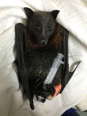 Jarrah was rescued from powerlines this week.