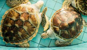 Sea Turtle Centre